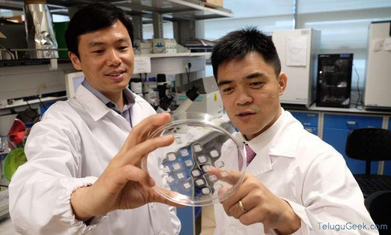 Prof Chen Peng with Asst Prof Xu Chenjie