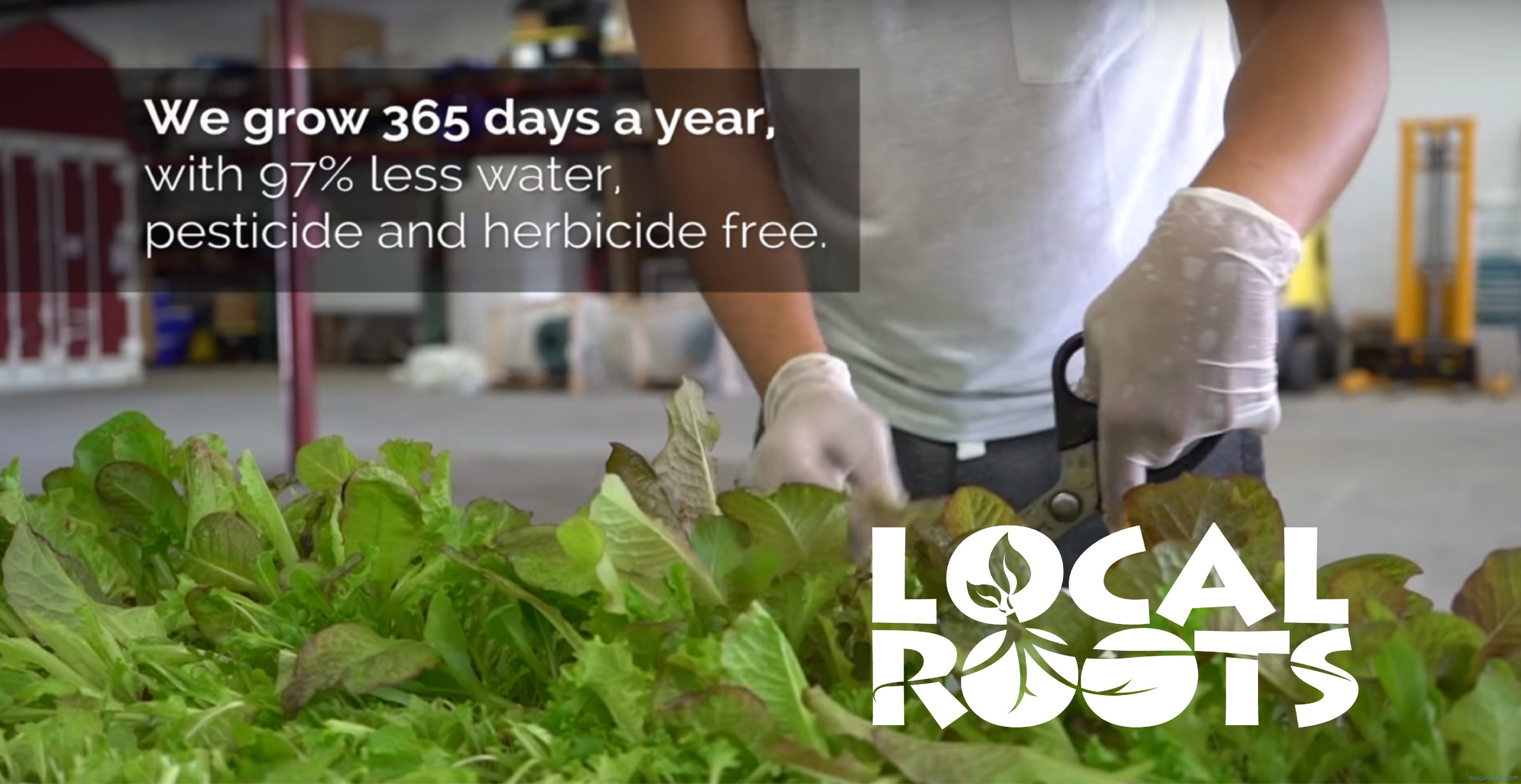 Local Roots: ఈ కొత్త రకం వ్యవసాయ పద్ధతిలో నేల మీద కాదు కంటైనర్లలో పంట పండిస్తారు